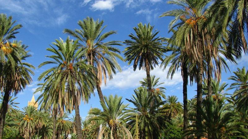 Covid19, Comune di Palermo: attività sportive in forma organizzata nelle aree verdi cittadine